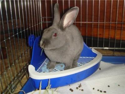 лоток кролика