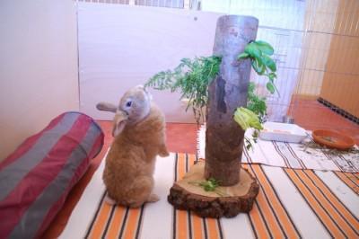 игрушки для кролика