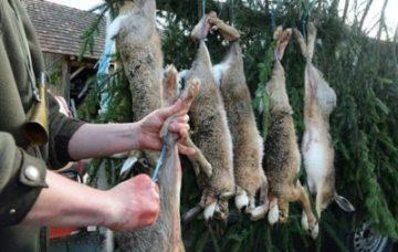 Забиваєш худобу,  кролів, птицю  - клич ветлікаря до забою і після. Інакше не продати вирощене!