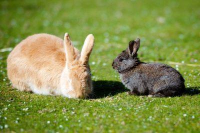 Крольчиха ест крольчат: почему, причины явления