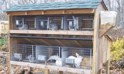 кролики на даче