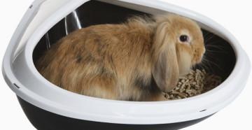 кролик и лоток