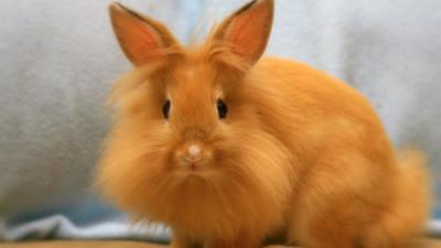 Кролик 5