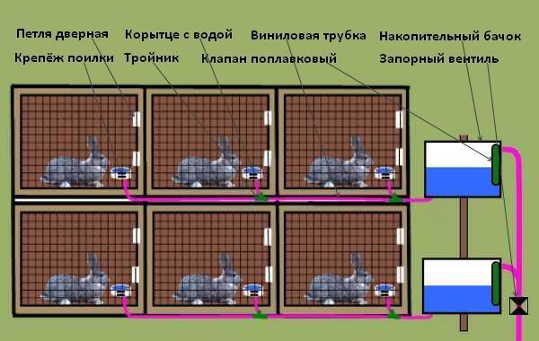 Что нужно знать о ниппельных поилках для кроликов