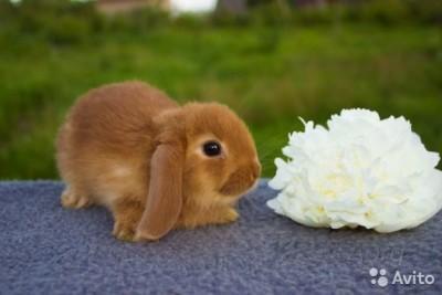 Определяемся, как же назвать любимого кролика