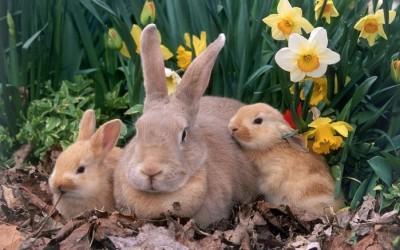 Ответим на вопрос чем кормить кормящих крольчих: основные принципы питания