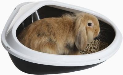 Разбираемся, как же можно приручить кролика