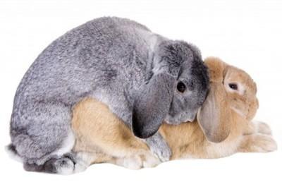 Разберемся, как и чем кормят кроликов зимой в домашних условиях. Основные принципы и советы.