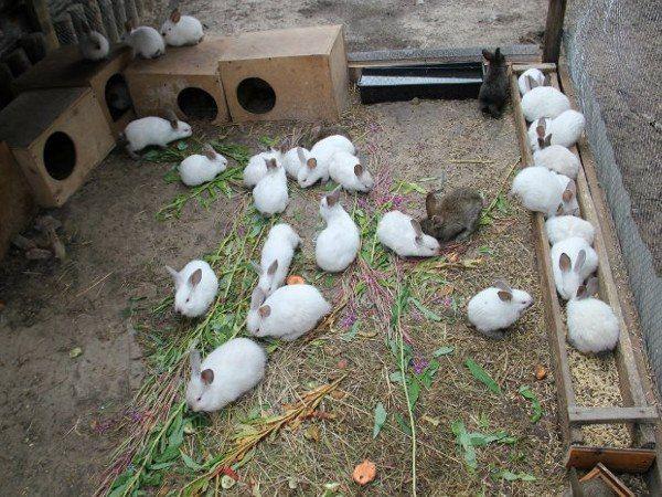 Особенности разведения кроликов в ямах. Преимущества, недостатки, отзывы
