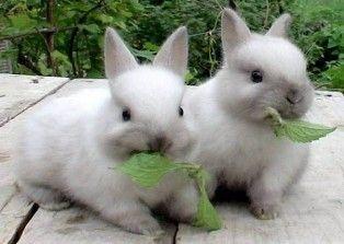 Разберемся, как кормить декоративного кролика: особенности и правила, которые необходимо соблюдать
