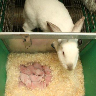 Как сделать крольчатник своими руками: основные принципы для начинающих кролиководов