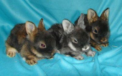 Принципы содержания и ухода за новорожденными крольчатами