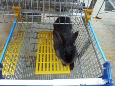 Как вылечить у кролика пододерматит