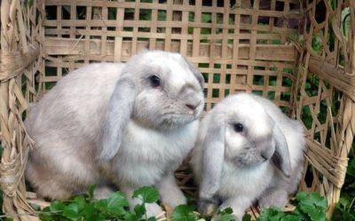 Важность витаминов для кроликов: их особенности и в каком количестве давать
