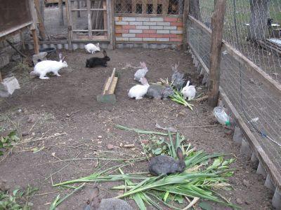 Разберем основы разведения и содержания кроликов в вольерах