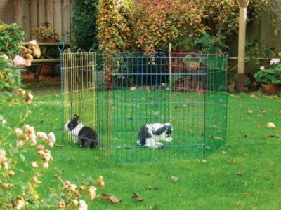 Как сделать вольеры для разведения кроликов