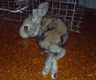 Что делать, если у кролика отказали лапы?