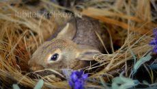 Декоративный кролик в сене