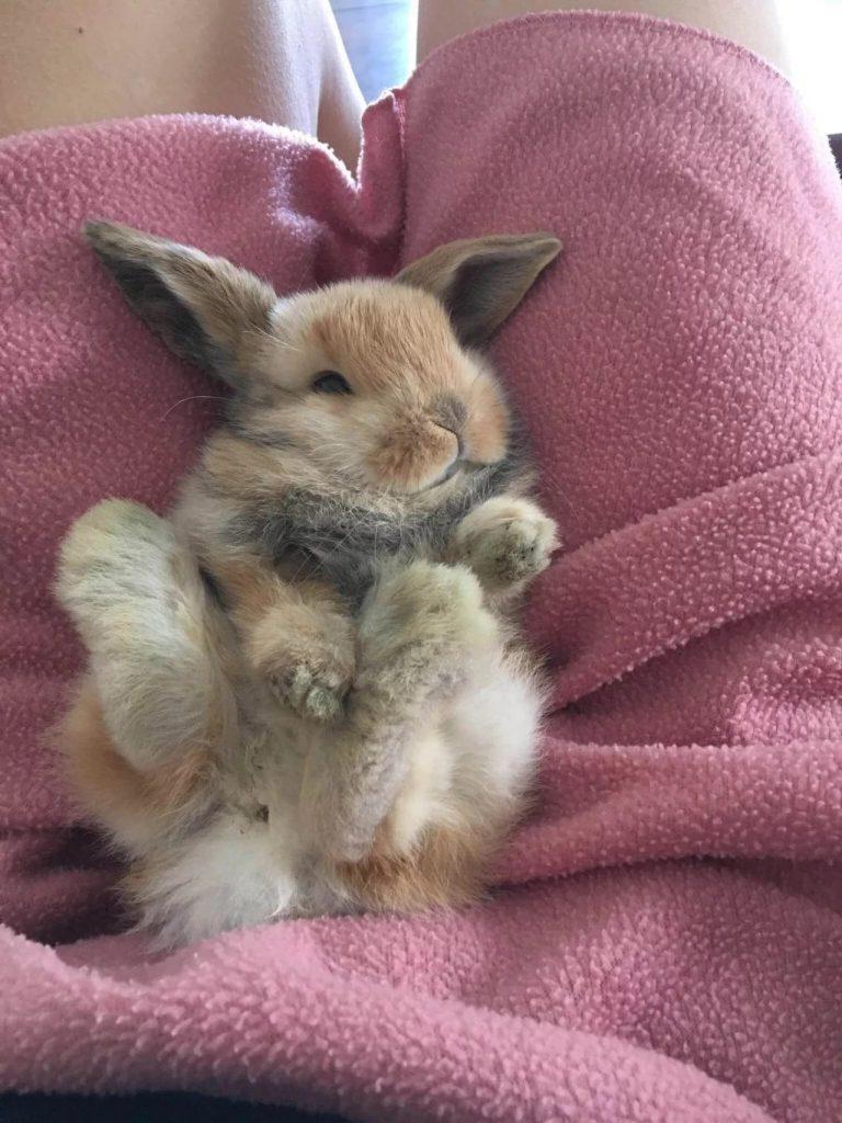 Кролик на коленях