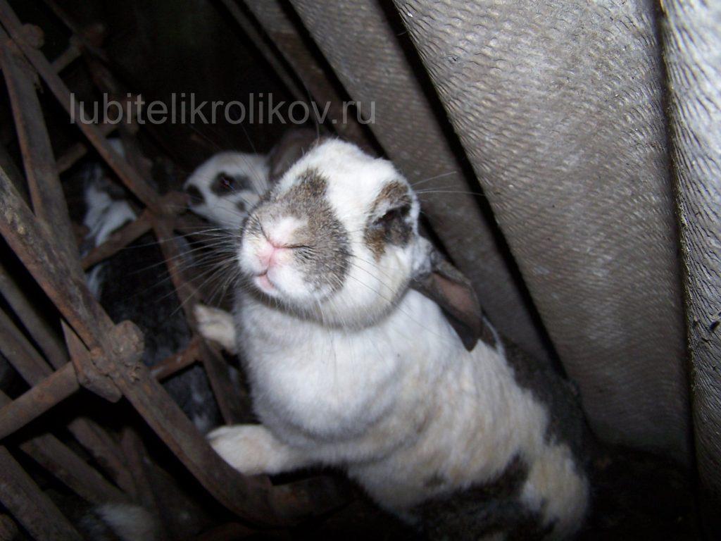 Кролик целуется