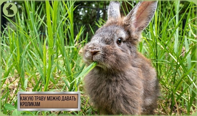 Кролик ест траву - какую траву можно давать кроликам