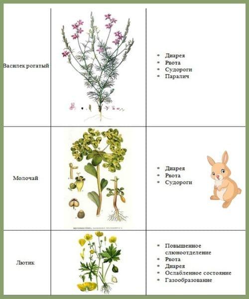 Список трав, которые нельзя давать кроликам