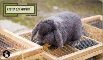 Клетки для кролика - декоративный кролик на клетке