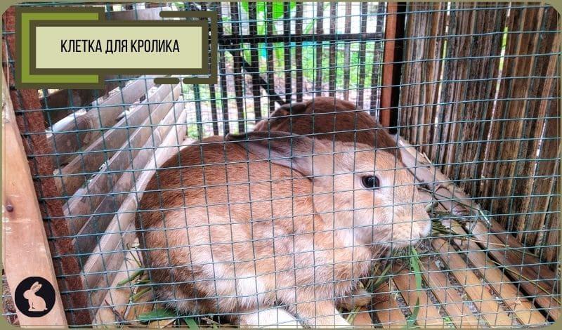 Клетка для кролика: кролик в клетке