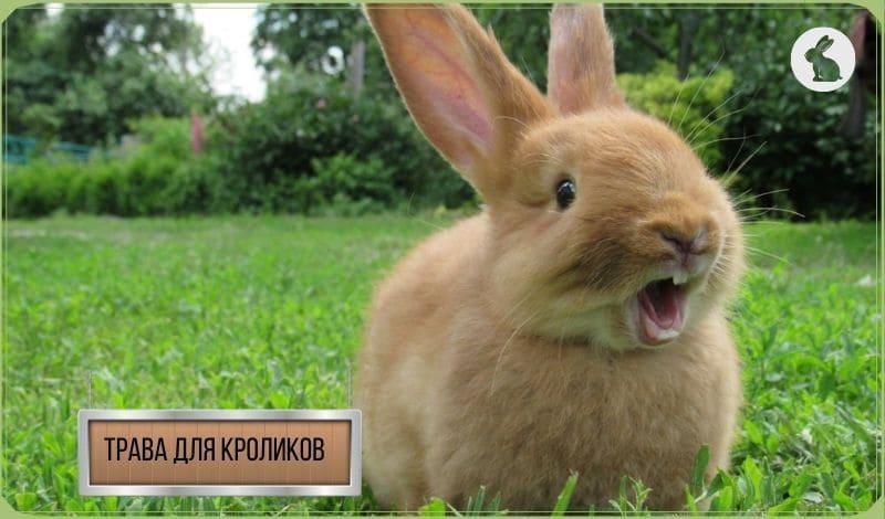 Трава для кроликов: какую траву можно давать кроликам